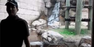 A gibbonok nem viccelnek