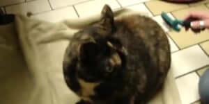 Ha szeretnéd megtudni, hogy a macskádat megszállta-e valami, kezdd el fésülgetni