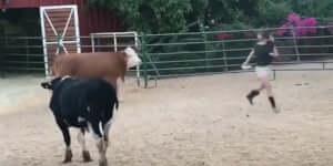 Kedves kis tehén :)