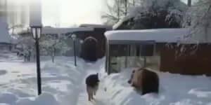 Kutya: -Neked mi bajod van medve?