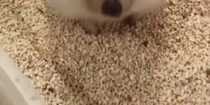 Láttál már sündisznót nyújtózkodni?