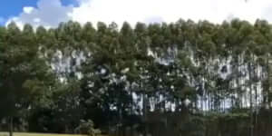 Karakterválasztó képernyő egy videójátékban