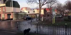 Ki játszik a kutyával?