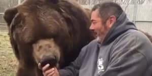 Ilyen egy jó barát medve