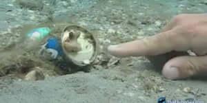 Dobozos üdítőben lakik a kis polip